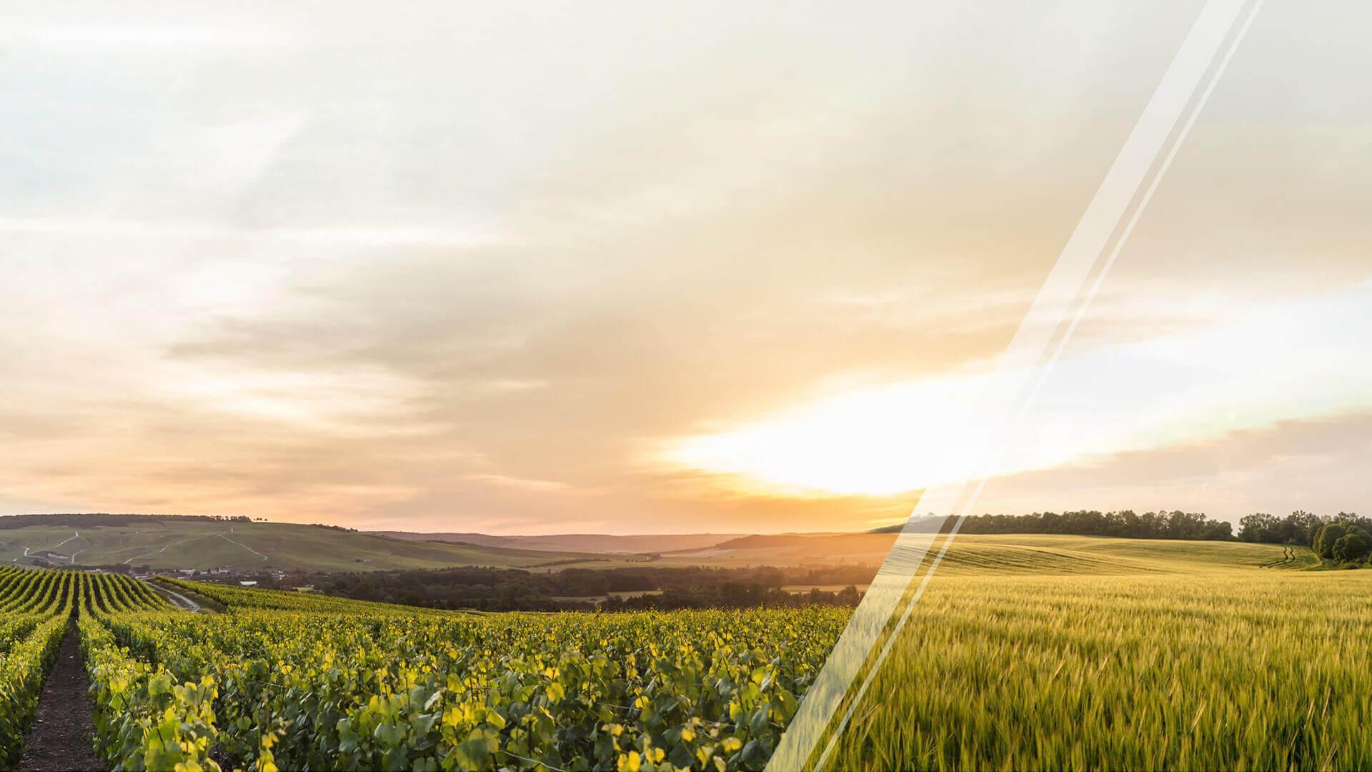 Solutions d'agriculture de précision Exxact robotics